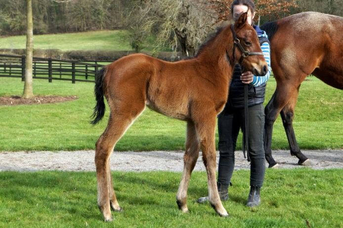 Iron Heart foal