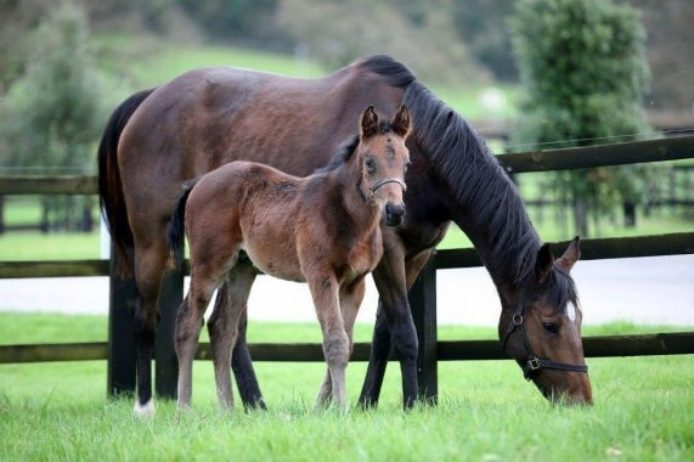 Jtj and foal
