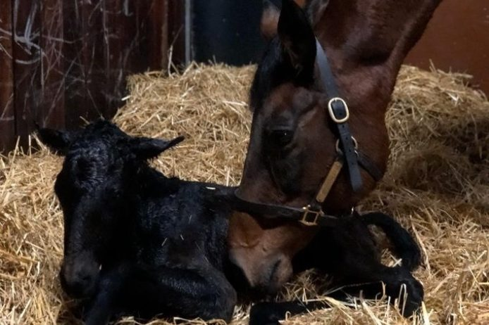 RL filly foal 2