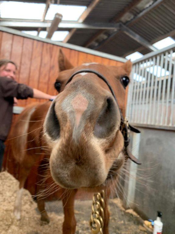 Foal enjoying groom
