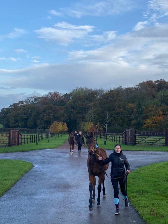 Foal walking 2