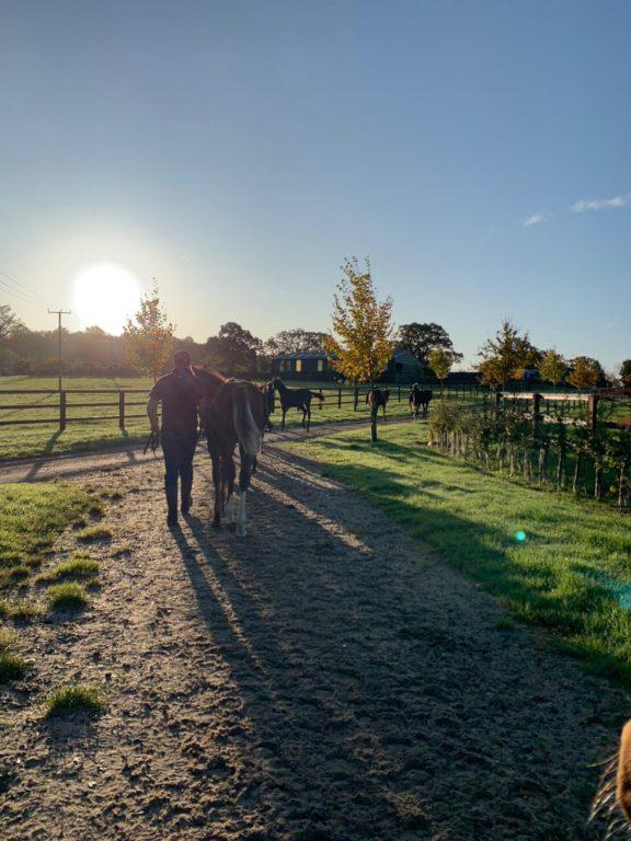 Foal walking 4